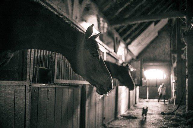 Streifenvorhänge eignenen sich auch ideal für Ihren Pferdestall